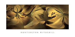"Lilies #35 by Huntington Witherill - 18 X 36"" - Fine Art Posters."