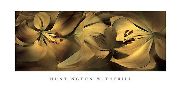 Lilies #35 by Huntington Witherill - 18 X 36