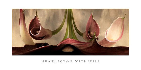 Calla Lilies #11 by Huntington Witherill - 18 X 36
