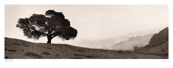 Black Oak Tree by Alan Blaustein - 15 X 38