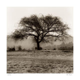 "Willow Tree by Alan Blaustein - 24 X 24"" - Fine Art Poster."