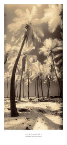 "Palm Shadows I by Susan Friedman - 18 X 39"" - Fine Art Poster."