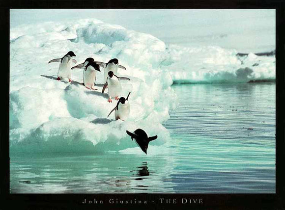 The Dive by John Giustina - 24 X 32