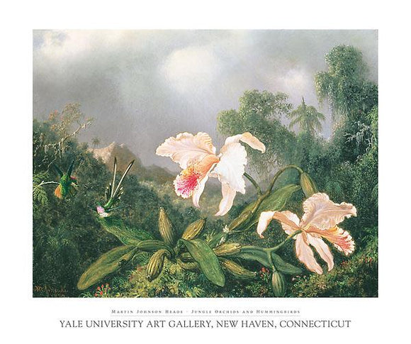 Jungle Orchids and Hummingbirds by Martin Johnson Heade - 30 X 35