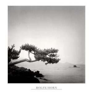 "Two Branched Pine, Nakano Umi, Japan by Rolfe Horn - 24 X 24"" - Fine Art Poster."