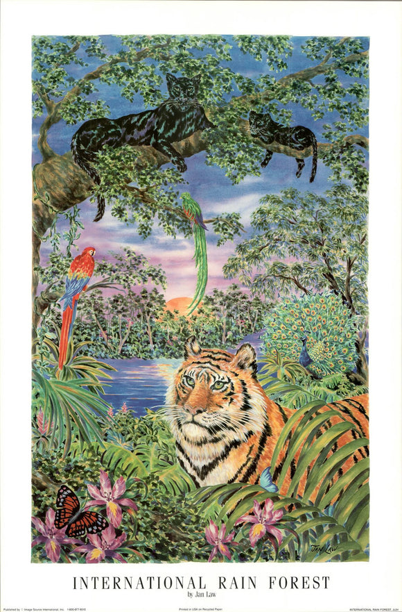 International Rain Forest by Jan Law - 24 X 36 Inches - Fine Art Poster.
