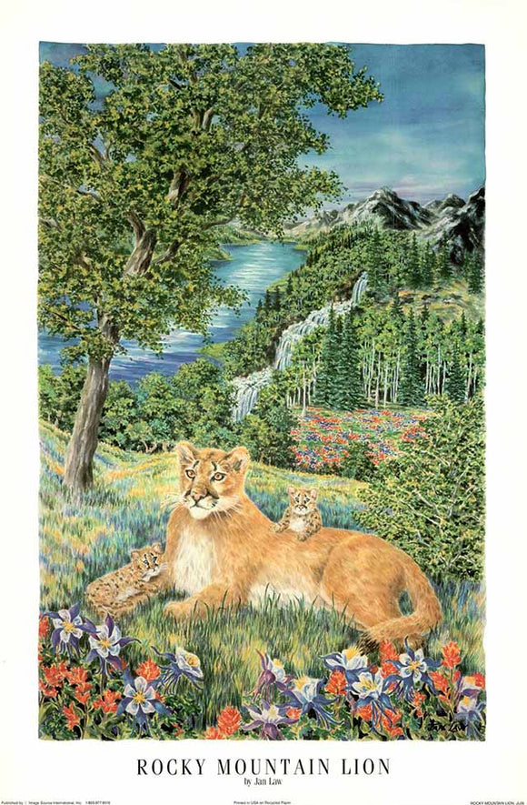 Rocky Mountain Lion by Jan Law - 24 X 36 Inches - Fine Art Poster.