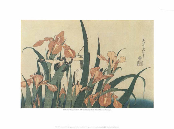 Iris and Grasshopper, 1833-1834 by Hokusai - 12 X 16