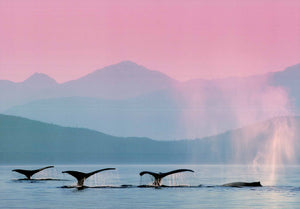 "Whales - 20 X 28"" - Fine Art Poster."