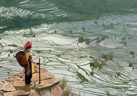 China, Yunnan Province, rice fields with water by Bruno Morandi - 20 X 28