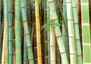 "Bamboo Forest, Sagano, Japan by Rob Tilley - 20 X 28"" - Fine Art Poster."