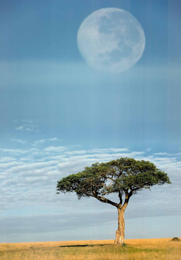Full Moon, Masai Mara, Kenya by Adam Jones - 20 X 28