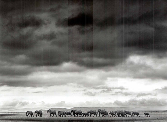 Elephant herd by Jean-Michel Labat - 20 X 28