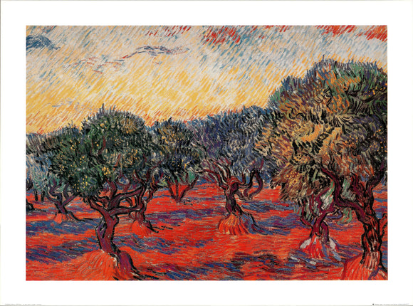 Olive Trees by Vincent Van Gogh - 24 X 32 Inches - Fine Art Poster.