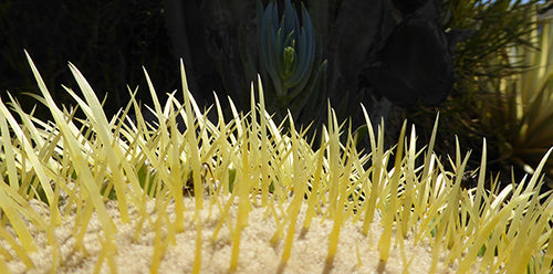 The spines of mother-in-law's cushion, aka golden barrel cactus, up close