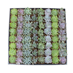 2 Inch Assorted Rosettes 64 Pack