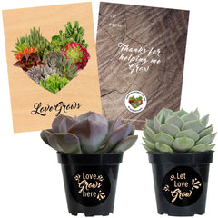 "Love Grows Rosette Succulents Collection 3.5"" 2 Pack Includes To/From Card"