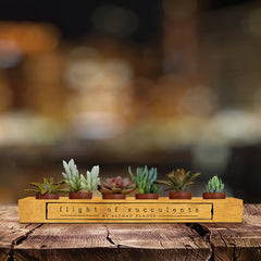 "Flight of Succulents 6 Pack 1.75"" mini plants with To/From card"