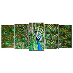 Magnificent Peacock Canvas Wall Art - Large 5-panel 72 x 32 inches