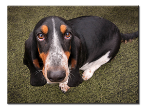 Sad Hound Dog Puppy Canvas Wall Art 1-panel 24 x 18 inches
