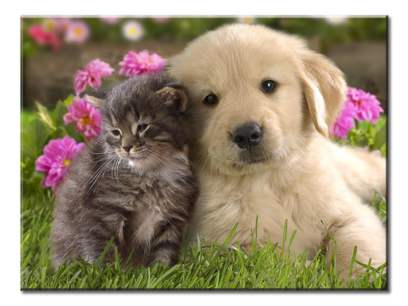 Kitten and Puppy Best Friends Canvas Wall Art 1-panel 24 x 18 inches