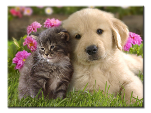 Cat Kitten and Puppy Dog Best Friends Canvas Wall Art - Extra Large 1-panel 40 x 30 inches