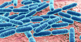 The Importance of Intestinal Flora – The Unsung Heroes