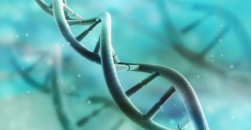 MTHFR Gene Mutation: Can You Rewire Your Genetics?