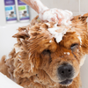 Furbliss® Deodorizing Invigorating Dog & Cat Grooming Shampoo