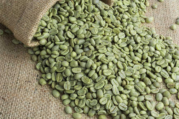 Green coffee bean with chlorogenic acids to support weight loss