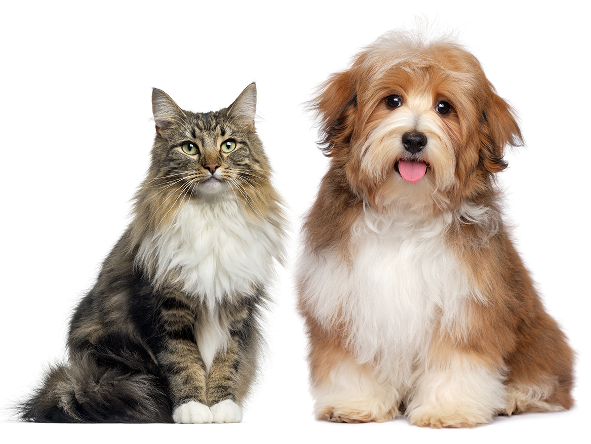 Fluffy Dog and Cat - Vetnique Labs Retail and Grooming Pet Products