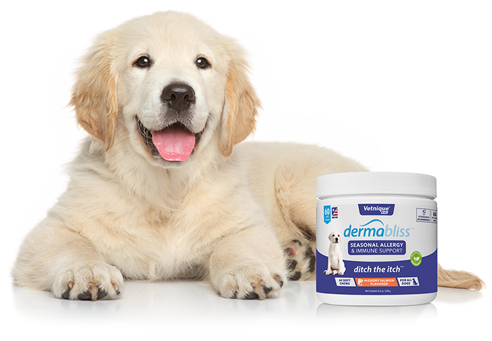 Dermabliss Allergy and Immune Supplement for Dogs