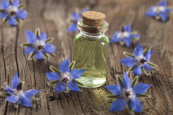 The Wonders Of Borage Oil... And Why Your Hair Will Absolutely Love It