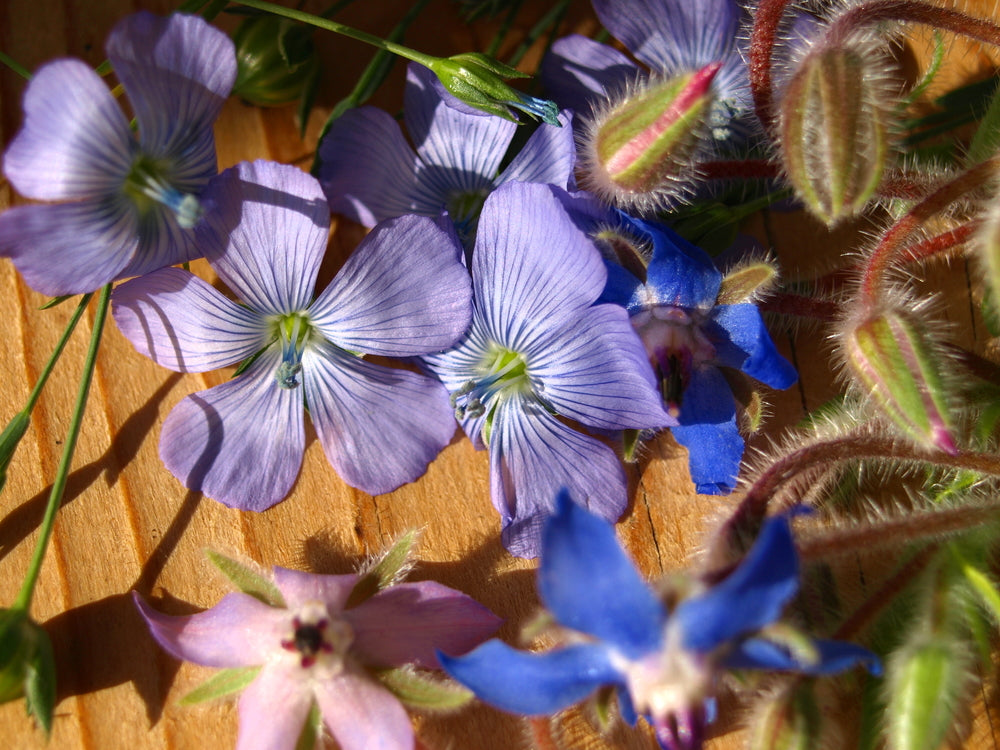 borage and linseed blossoms