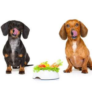 The Role Of Vitamins for Dogs and Symptoms of Deficiency