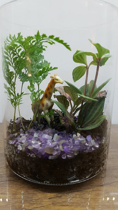 Blessed Plants - Terrarium (Diameter 8 cm x Height 12 cm) - Customise