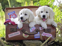 Travelling Puppies Puzzle 100pc