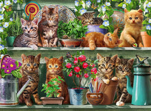 Cats on the Shelf Puzzle 500pc