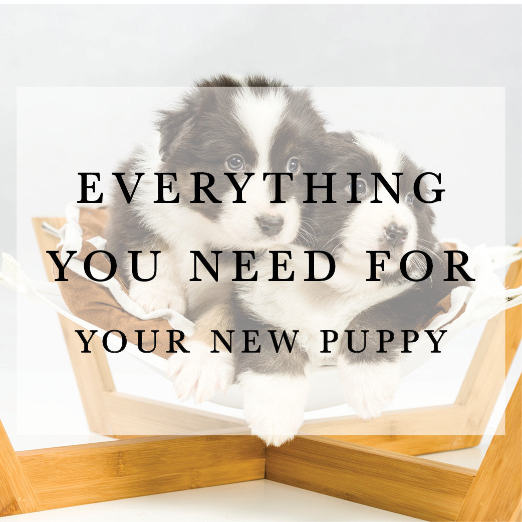 Everything You Need For A New Puppy Henley Co Australia