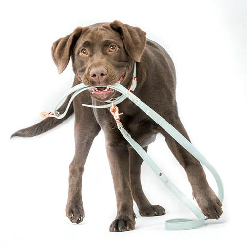 henley and co australia luxury dog accessories separation anxiety in dogs