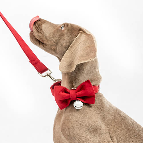 henley and co australia luxury dog accessories bow tie leash