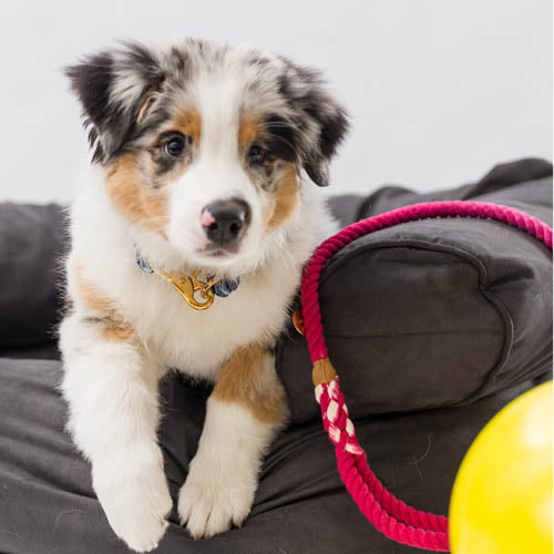 henley and co australia puppy training luxury dog accessories