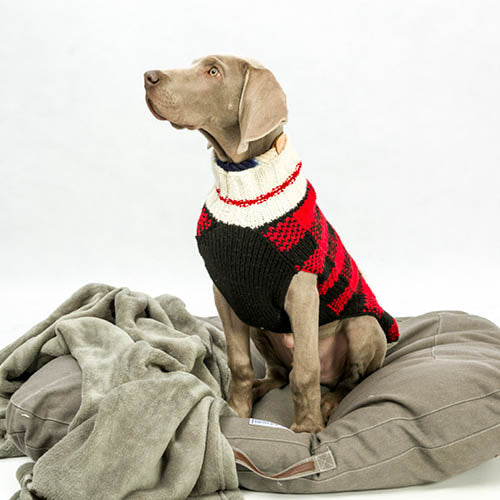 henley and co luxury dog products winter blog