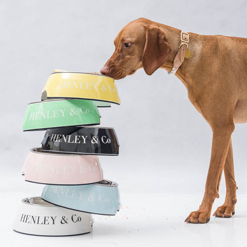henley and co australia luxury dog products