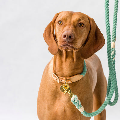 Henley & Co Ombré Rope Collar