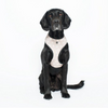 NEOPRENE HARNESS OATMEAL