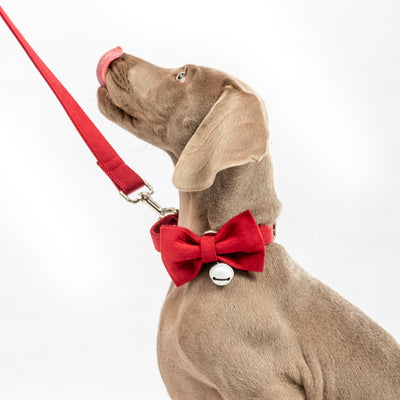 Christmas Collar & Lead Set