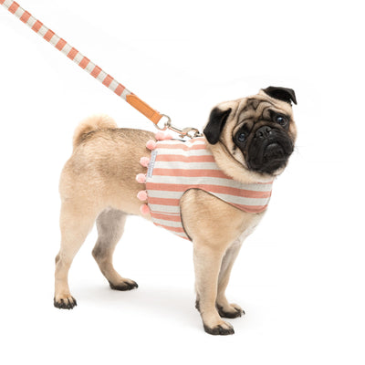 Orange Stripe Brushed Cotton Soft Dog Harness