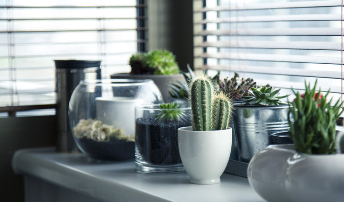 Succulents. How and when did they become so trendy?