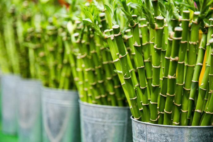 5 Benefits of Bamboo Products
